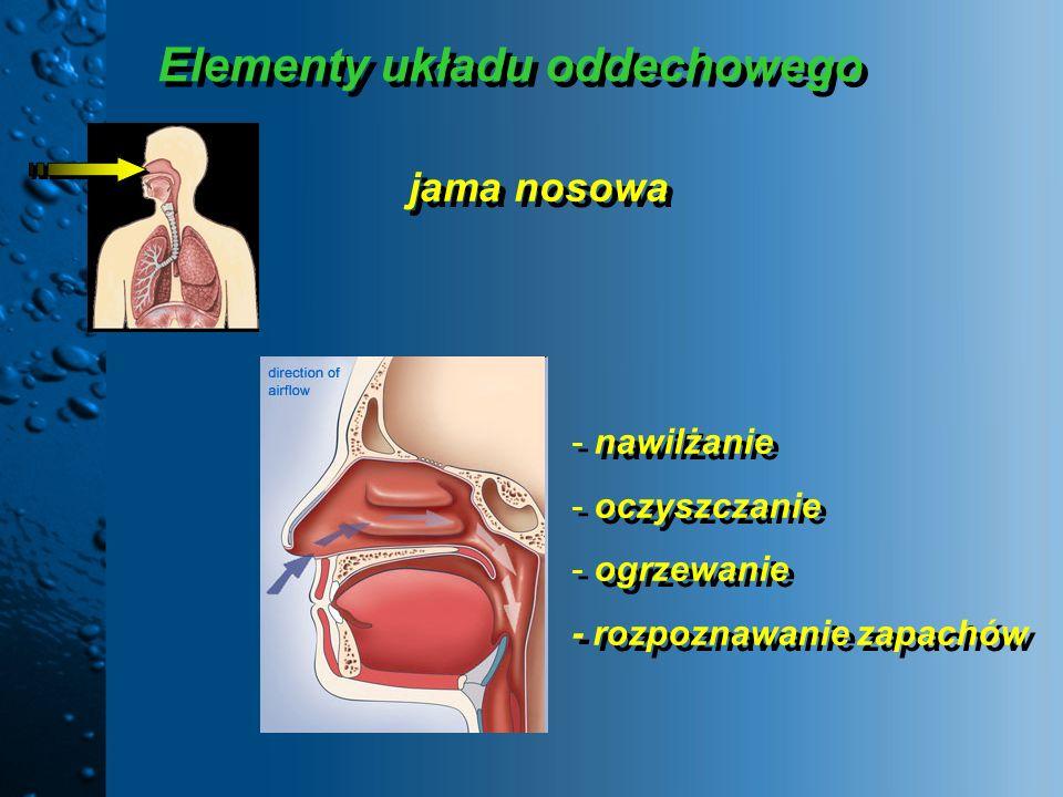 Elementy układu oddechowego jama nosowa - nawilżanie - oczyszczanie - ogrzewanie - rozpoznawanie zapachów - nawilżanie - oczyszczanie - ogrzewanie - r