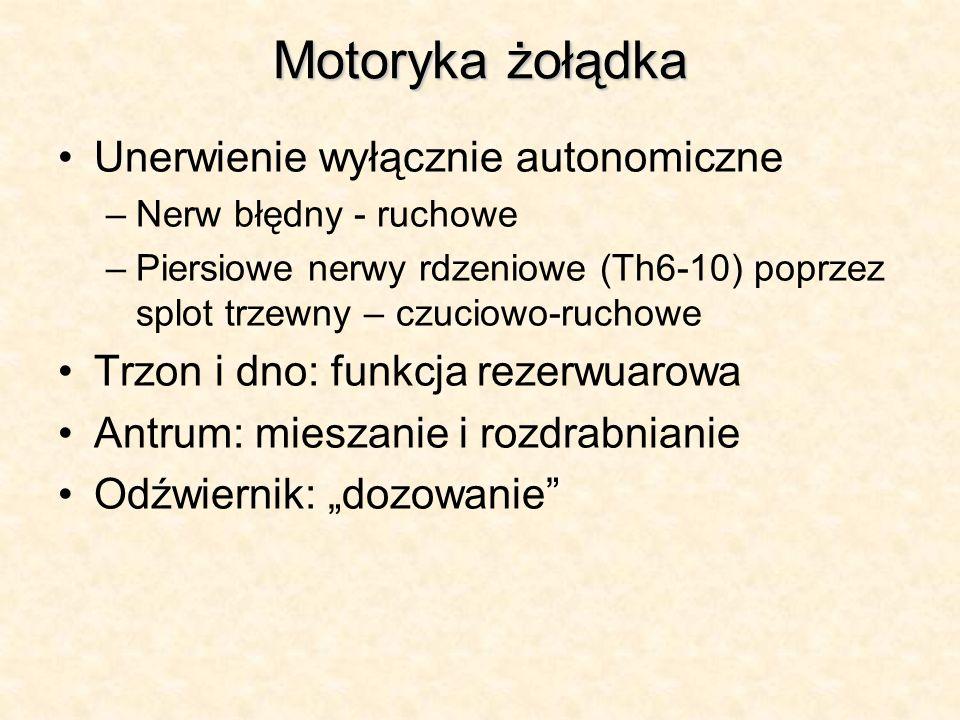 Motoryka żołądka Unerwienie wyłącznie autonomiczne –Nerw błędny - ruchowe –Piersiowe nerwy rdzeniowe (Th6-10) poprzez splot trzewny – czuciowo-ruchowe