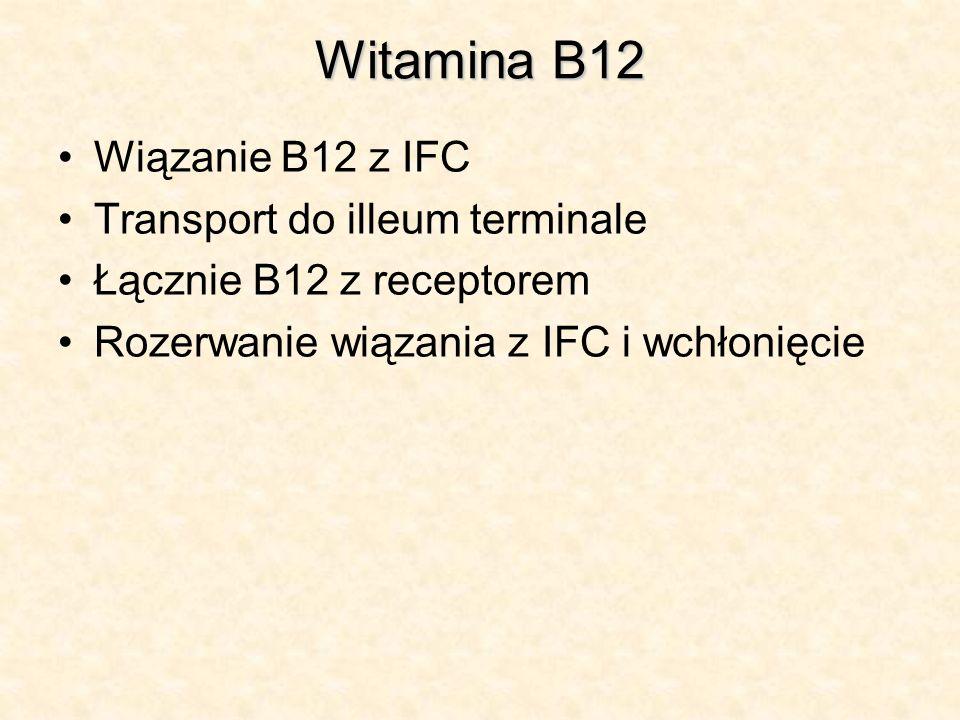 Witamina B12 Wiązanie B12 z IFC Transport do illeum terminale Łącznie B12 z receptorem Rozerwanie wiązania z IFC i wchłonięcie