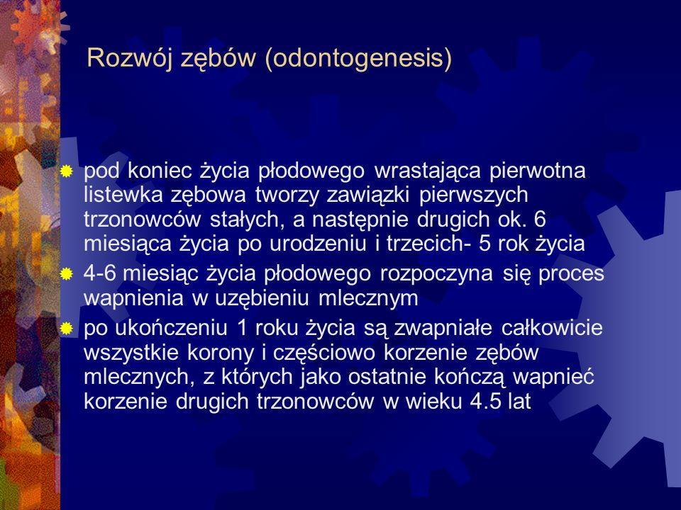 Rozwój zębów (odontogenesis)