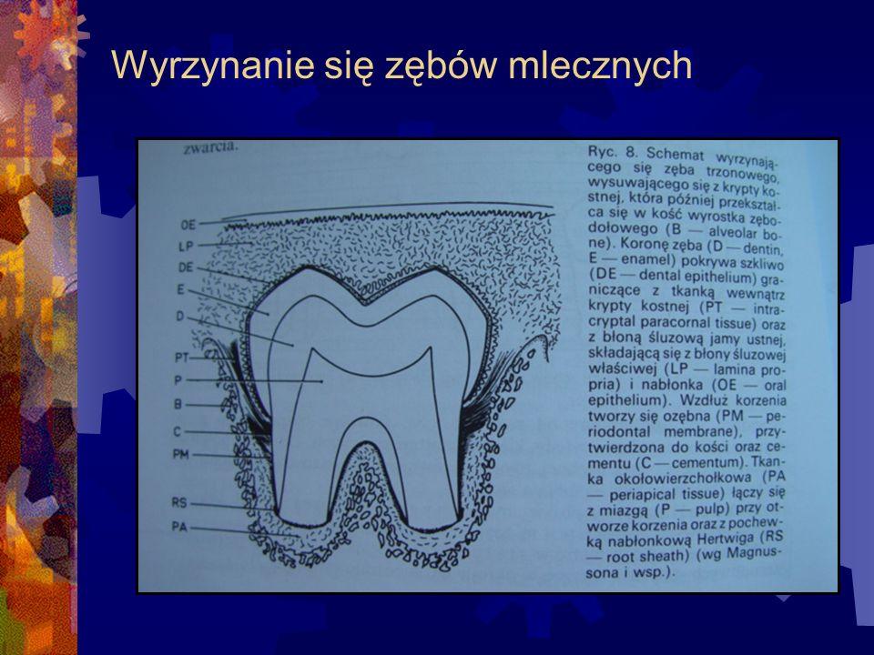 Wyrzynanie się zębów mlecznych