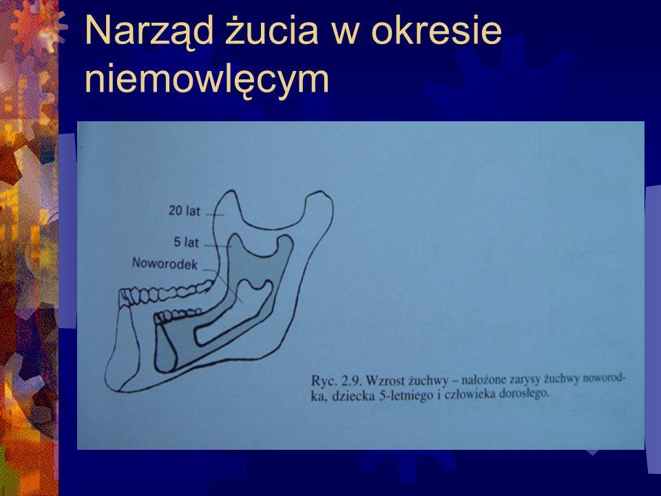 Pod koniec życia płodowego rozwija się w jamie ustnej specjalny narząd anatomiczno-fizjologiczny, który będzie służyć noworodkowi do przyjmowania pokarmów.