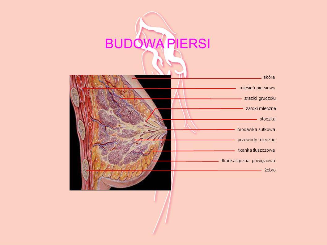 skóra mięsień piersiowy zraziki gruczołu zatoki mleczne otoczka brodawka sutkowa przewody mleczne tkanka tłuszczowa tkanka łączna powięziowa żebro BUD