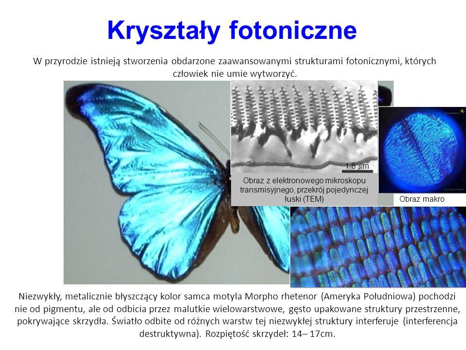 Niezwykły, metalicznie błyszczący kolor samca motyla Morpho rhetenor (Ameryka Południowa) pochodzi nie od pigmentu, ale od odbicia przez malutkie wielowarstwowe, gęsto upakowane struktury przestrzenne, pokrywające skrzydła.