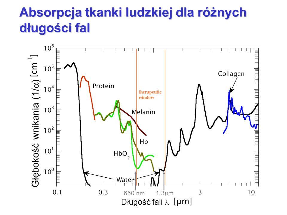 Absorpcja tkanki ludzkiej dla różnych długości fal 1.3 m 650 nm Głębokość wnikania (1/ ) Długość fali