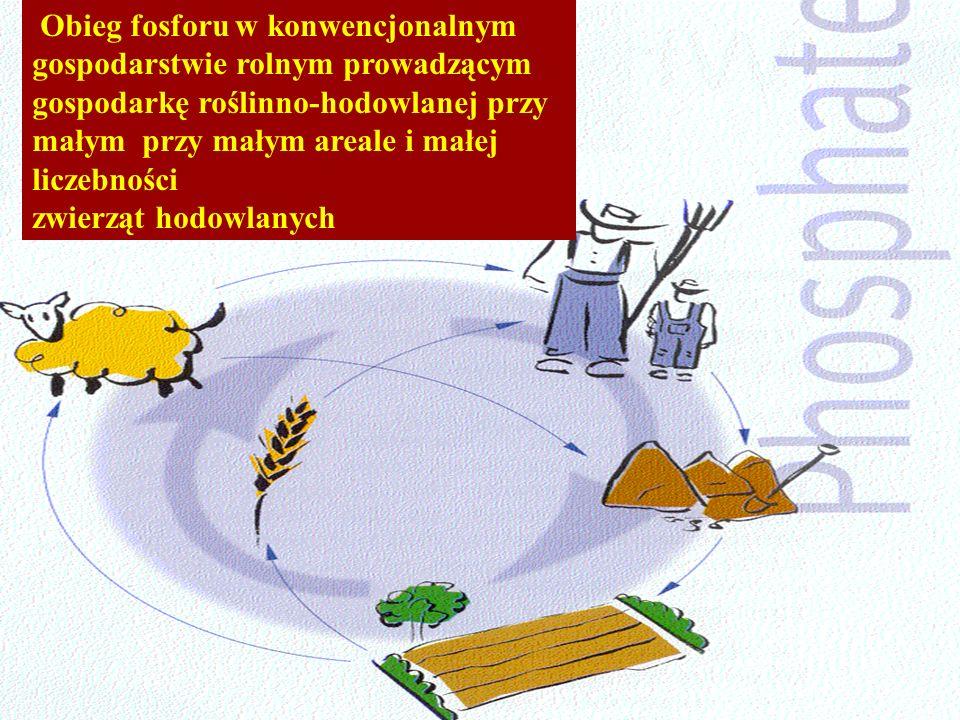 Obieg fosforu w konwencjonalnym gospodarstwie rolnym prowadzącym gospodarkę roślinno-hodowlanej przy małym przy małym areale i małej liczebności zwier