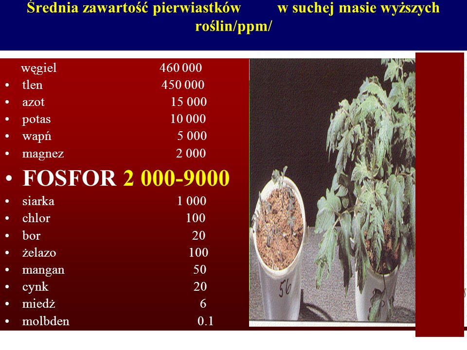 Średnia zawartość pierwiastków w suchej masie wyższych roślin/ppm/ węgiel 460 000 tlen 450 000 azot 15 000 potas 10 000 wapń 5 000 magnez 2 000 FOSFOR