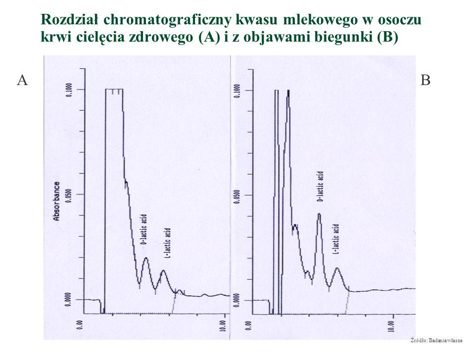 Rozdział chromatograficzny kwasu mlekowego w osoczu krwi cielęcia zdrowego (A) i z objawami biegunki (B) AB Źródło: Badania własne