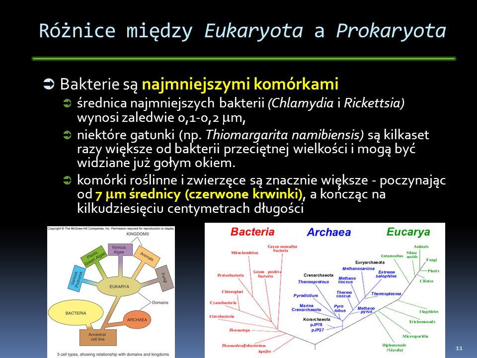 Różnice między Eukaryota a Prokaryota Bakterie są najmniejszymi komórkami Bakterie są najmniejszymi komórkami średnica najmniejszych bakterii (Chlamyd