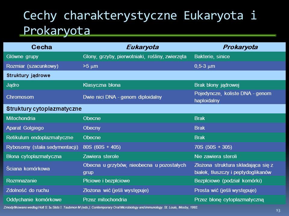 Cechy charakterystyczne Eukaryota i Prokaryota 13 CechaEukaryotaProkaryota Glówne grupyGlony, grzyby, pierwotniaki, rośliny, zwierzętaBakterie, sinice