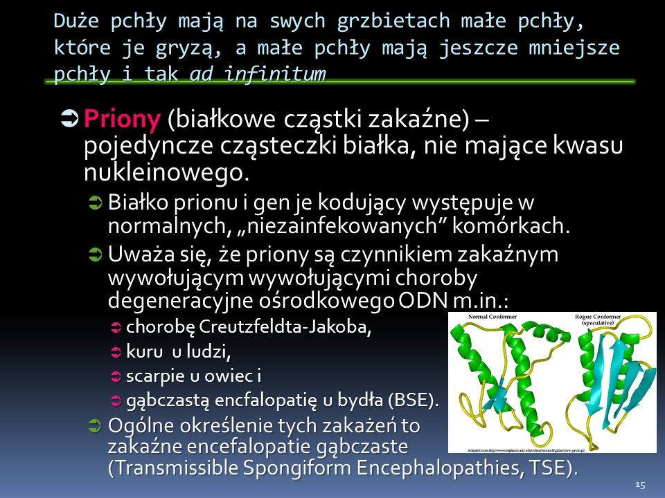 Duże pchły mają na swych grzbietach małe pchły, które je gryzą, a małe pchły mają jeszcze mniejsze pchły i tak ad infinitum Priony (białkowe cząstki z