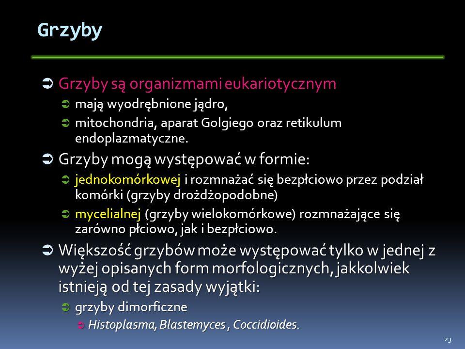 Grzyby Grzyby są organizmami eukariotycznym Grzyby są organizmami eukariotycznym mają wyodrębnione jądro, mają wyodrębnione jądro, mitochondria, apara