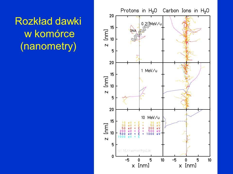 Fragmenty jądrowe w terapii wiązkami jonów węgla D.