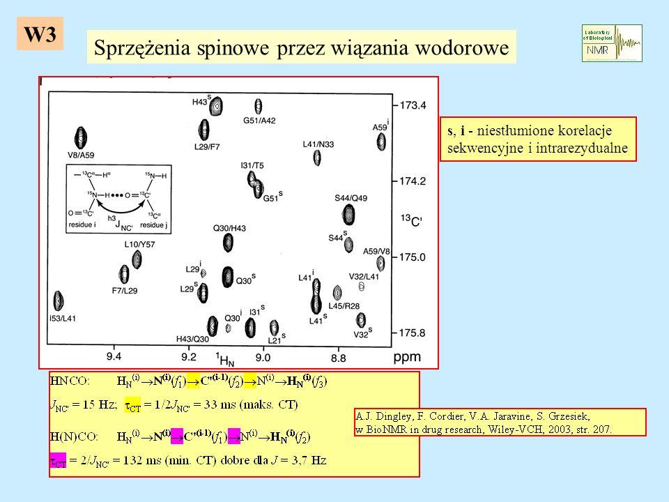 Sprzężenia spinowe przez wiązania wodorowe s, i - niestłumione korelacje sekwencyjne i intrarezydualne W3