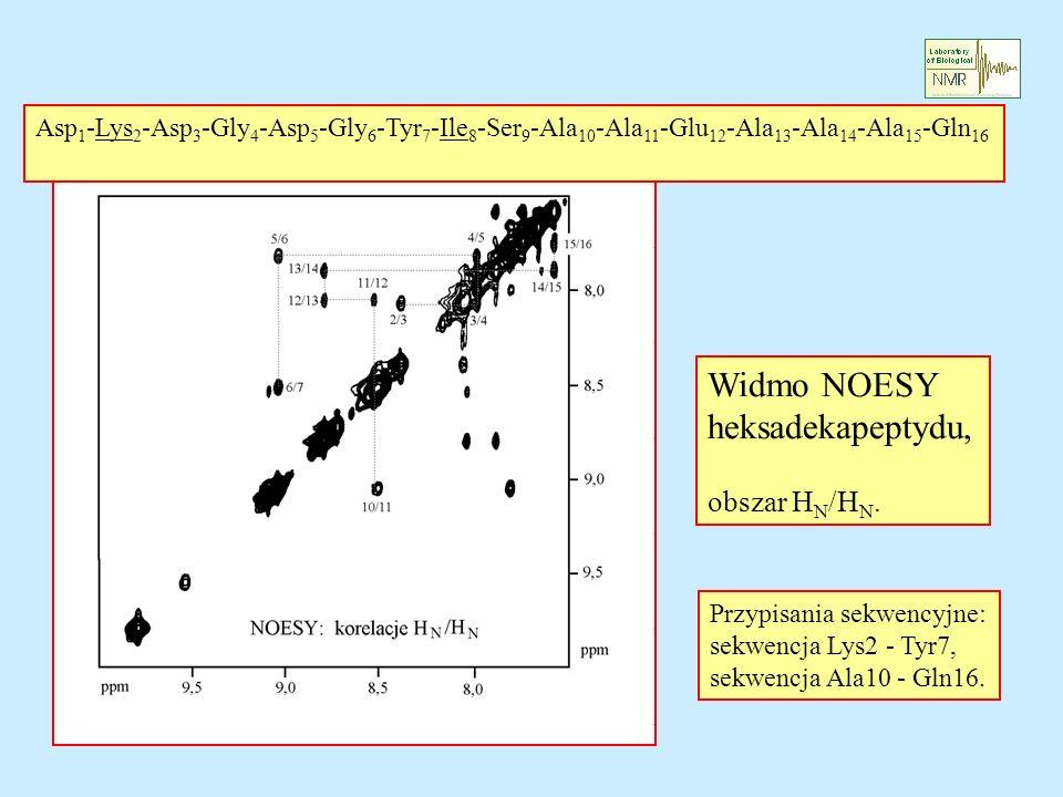 Widmo NOESY heksadekapeptydu, obszar H N /H N. Asp 1 -Lys 2 -Asp 3 -Gly 4 -Asp 5 -Gly 6 -Tyr 7 -Ile 8 -Ser 9 -Ala 10 -Ala 11 -Glu 12 -Ala 13 -Ala 14 -