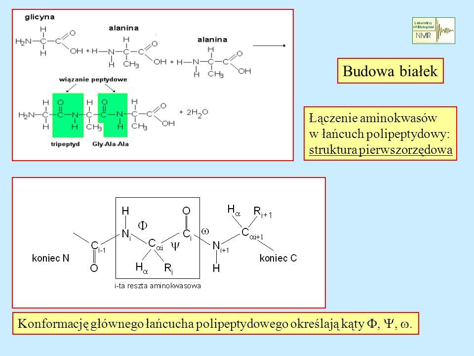 Budowa białek Łączenie aminokwasów w łańcuch polipeptydowy: struktura pierwszorzędowa Konformację głównego łańcucha polipeptydowego określają kąty,,.