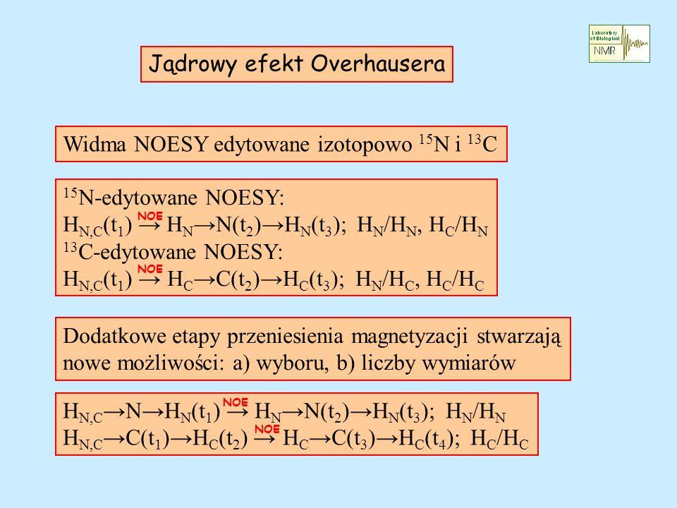 Jądrowy efekt Overhausera Widma NOESY edytowane izotopowo 15 N i 13 C 15 N-edytowane NOESY: H N,C (t 1 ) H N N(t 2 ) H N (t 3 ); H N /H N, H C /H N 13