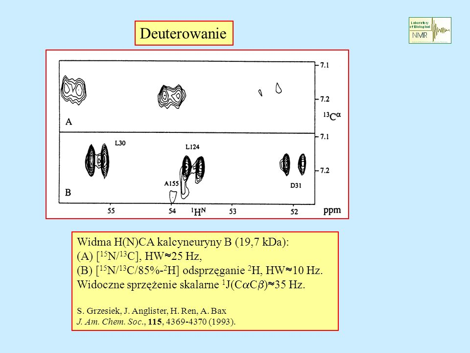 Widma H(N)CA kalcyneuryny B (19,7 kDa): (A) [ 15 N/ 13 C], HW 25 Hz, (B) [ 15 N/ 13 C/85%- 2 H] odsprzęganie 2 H, HW 10 Hz. Widoczne sprzężenie skalar