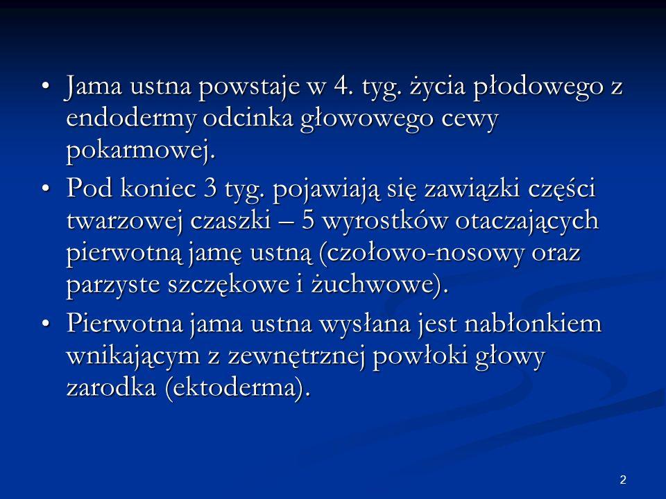 2 Jama ustna powstaje w 4. tyg. życia płodowego z endodermy odcinka głowowego cewy pokarmowej. Jama ustna powstaje w 4. tyg. życia płodowego z endoder