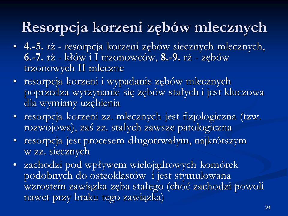 24 Resorpcja korzeni zębów mlecznych 4.-5. rż - resorpcja korzeni zębów siecznych mlecznych, 6.-7. rż - kłów i I trzonowców, 8.-9. rż - zębów trzonowy