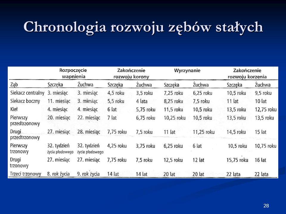 28 Chronologia rozwoju zębów stałych