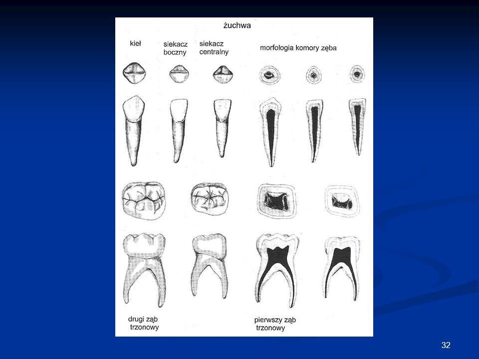 33 Oznaczanie zębów mlecznych