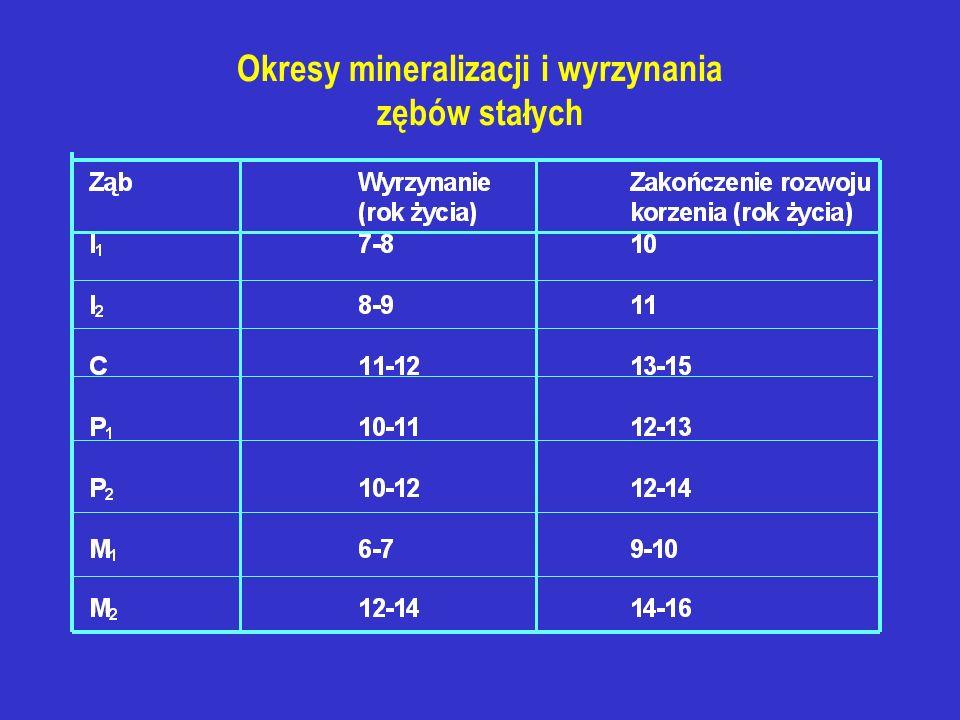 Okresy mineralizacji i wyrzynania zębów stałych
