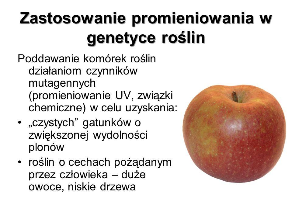 Zastosowanie promieniowania w genetyce roślin Poddawanie komórek roślin działaniom czynników mutagennych (promieniowanie UV, związki chemiczne) w celu
