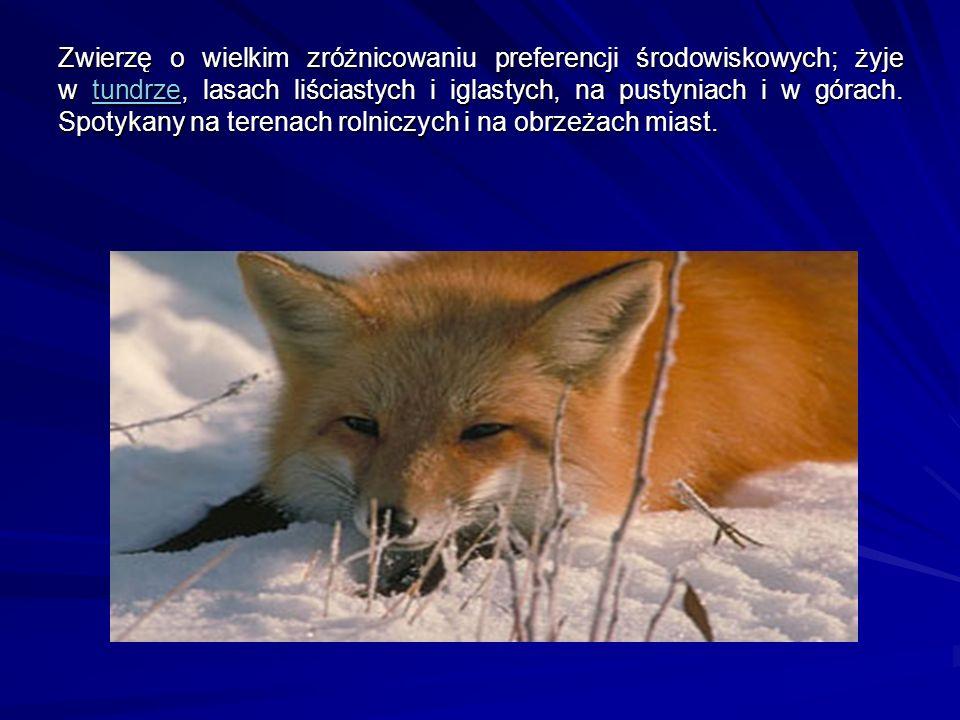 Zwierzę o wielkim zróżnicowaniu preferencji środowiskowych; żyje w tundrze, lasach liściastych i iglastych, na pustyniach i w górach. Spotykany na ter