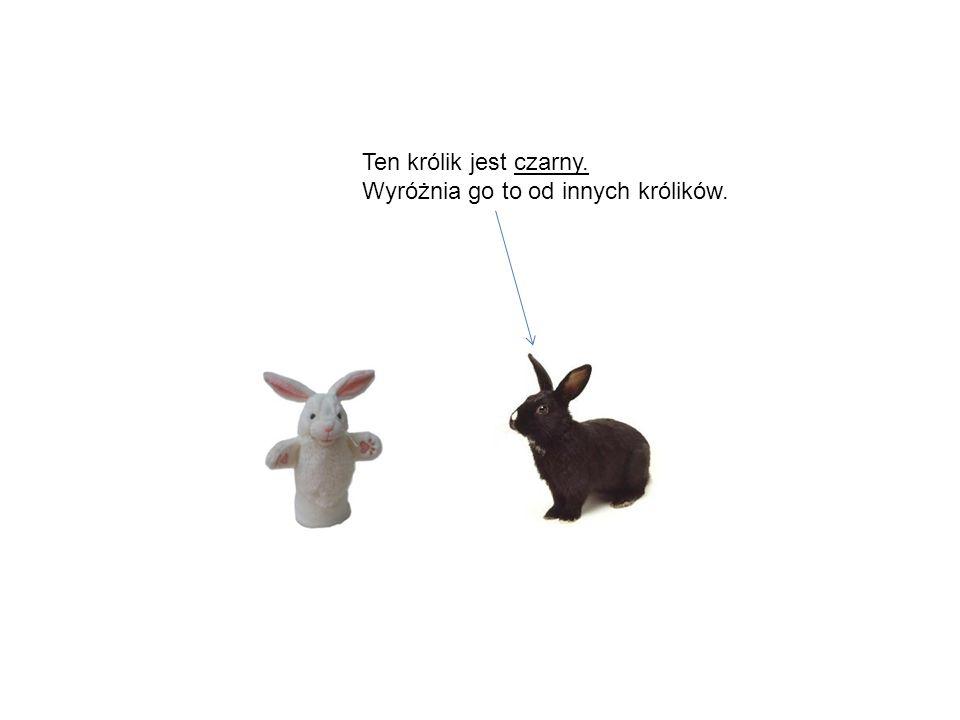 Ten królik jest czarny. Wyróżnia go to od innych królików.