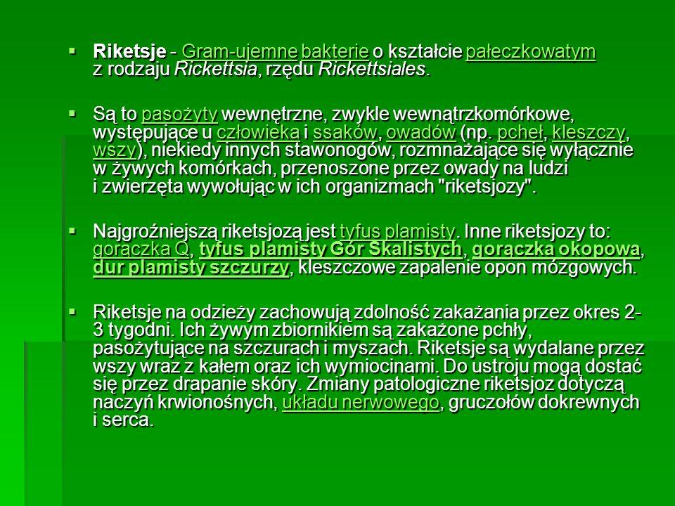 Riketsje - Gram-ujemne bakterie o kształcie pałeczkowatym z rodzaju Rickettsia, rzędu Rickettsiales. Riketsje - Gram-ujemne bakterie o kształcie pałec