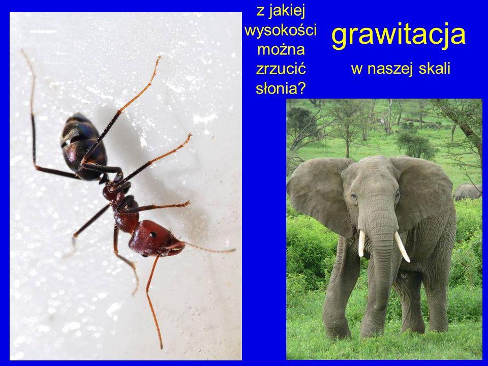 grawitacja w naszej skali z jakiej wysokości można zrzucić słonia?