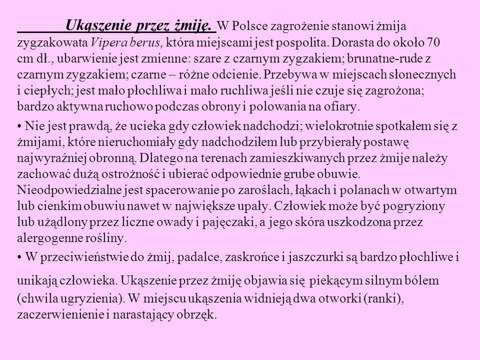 Ukąszenie przez żmiję. W Polsce zagrożenie stanowi żmija zygzakowata Vipera berus, która miejscami jest pospolita. Dorasta do około 70 cm dł., ubarwie