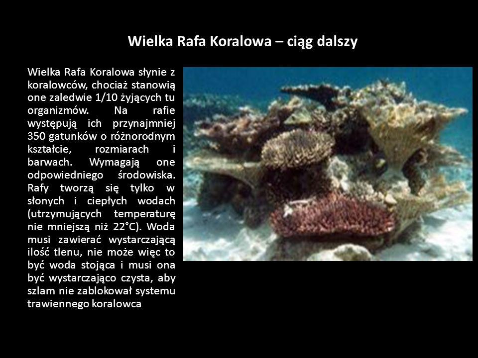 Wielka Rafa Koralowa Wielka Rafa Koralowa u wybrzeży stanu Queensland jest największą, najbardziej różnorodną i najpiękniejszą rafą koralową na świeci