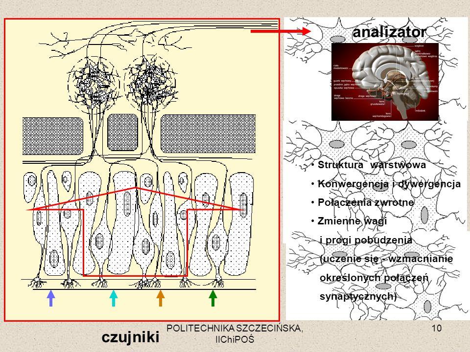 POLITECHNIKA SZCZECIŃSKA, IIChiPOŚ 10 czujniki analizator Struktura warstwowa Konwergencja i dywergencja Połączenia zwrotne Zmienne wagi i progi pobud