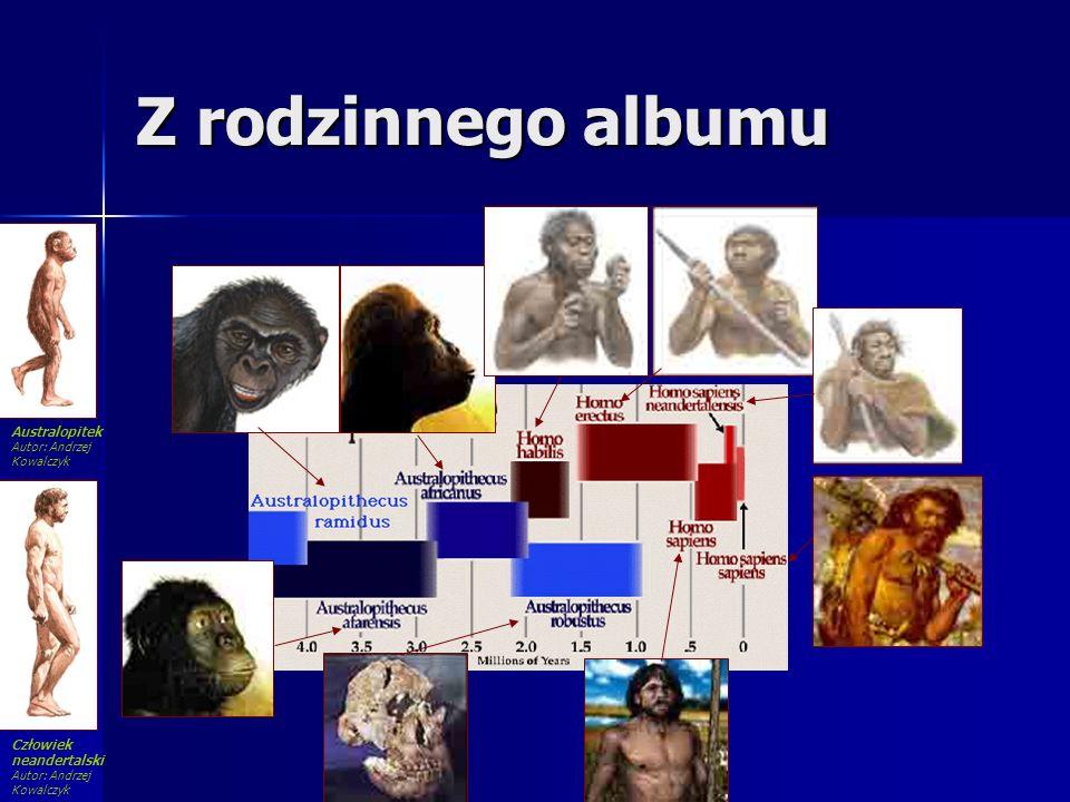 Z rodzinnego albumu Człowiek neandertalski Autor: Andrzej Kowalczyk Australopitek Autor: Andrzej Kowalczyk