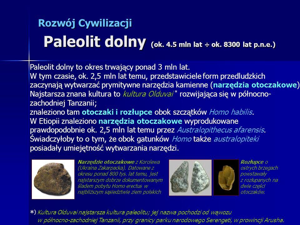 Paleolit dolny to okres trwający ponad 3 mln lat. W tym czasie, ok. 2,5 mln lat temu, przedstawiciele form przedludzkich zaczynają wytwarzać prymitywn