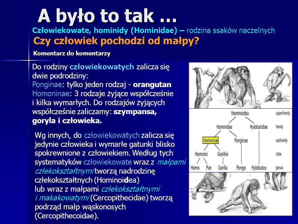 A było to tak … Człowiekowate, hominidy (Hominidae) – rodzina ssaków naczelnych Do rodziny człowiekowatych zalicza się dwie podrodziny: Ponginae: tylk