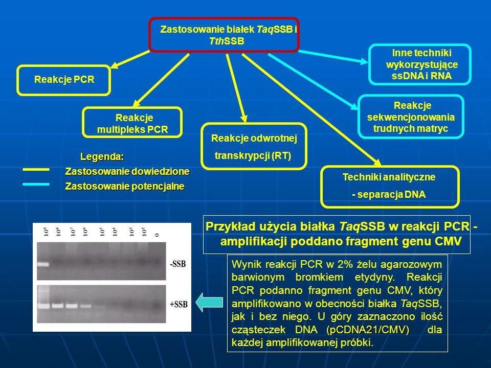 Zastosowanie białek TaqSSB i TthSSB Reakcje PCR Reakcje multipleks PCR Reakcje sekwencjonowania trudnych matryc Reakcje odwrotnej transkrypcji (RT) In