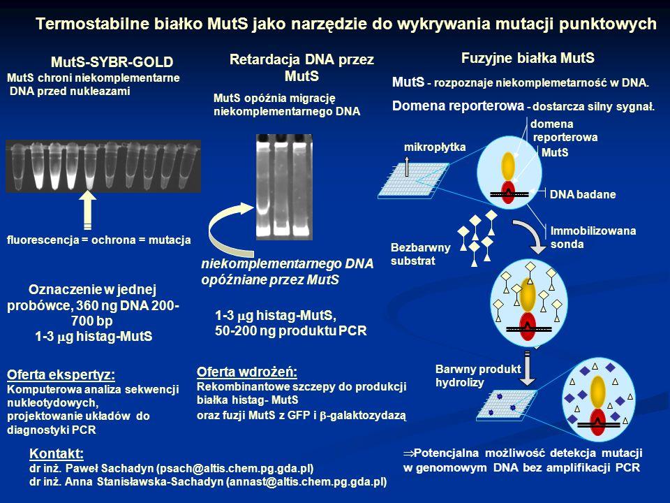 Termostabilne białko MutS jako narzędzie do wykrywania mutacji punktowych Oferta ekspertyz: Komputerowa analiza sekwencji nukleotydowych, projektowani