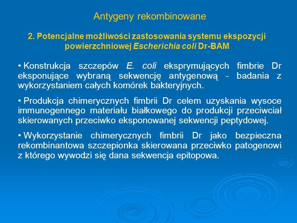 Konstrukcja szczepów E. coli eksprymujących fimbrie Dr eksponujące wybraną sekwencję antygenową - badania z wykorzystaniem całych komórek bakteryjnych