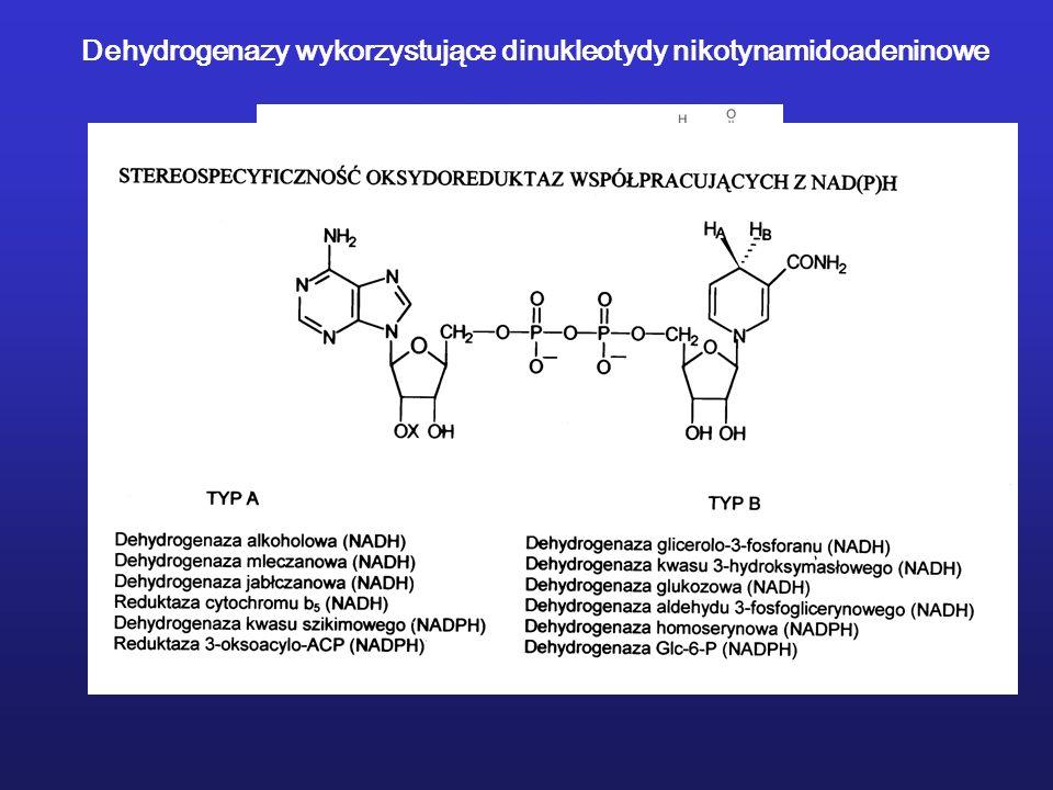 Dehydrogenazy wykorzystujące dinukleotydy nikotynamidoadeninowe