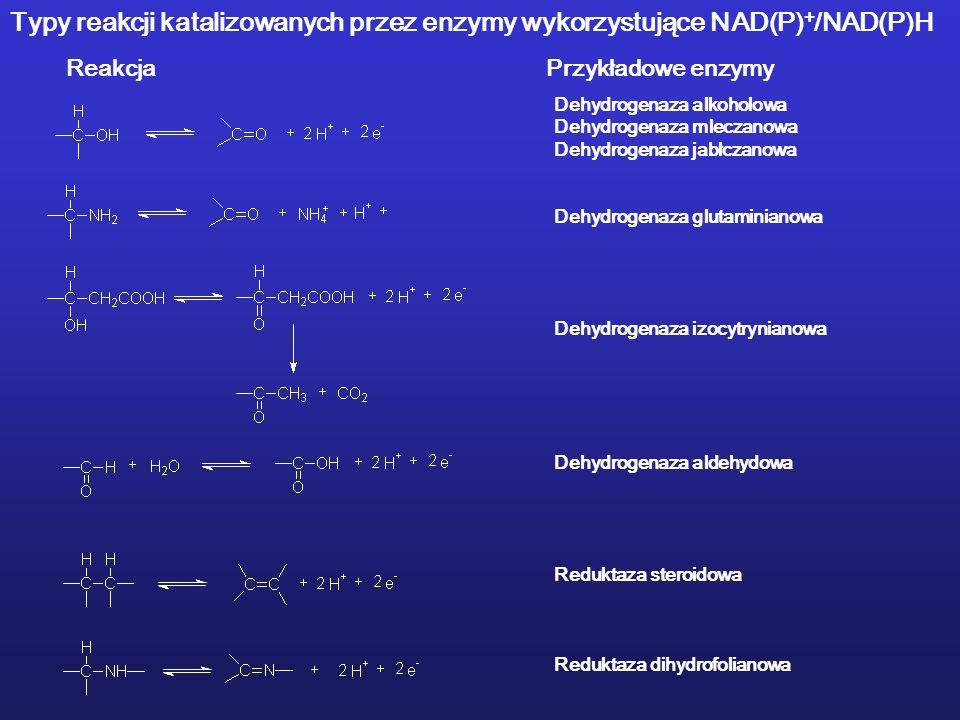 Dehydrogenaza alkoholowa Dehydrogenaza mleczanowa Dehydrogenaza jabłczanowa Dehydrogenaza glutaminianowa Dehydrogenaza izocytrynianowa Dehydrogenaza a