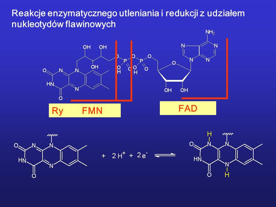 Reakcje enzymatycznego utleniania i redukcji z udziałem nukleotydów flawinowych RyboflawinaFMNFAD