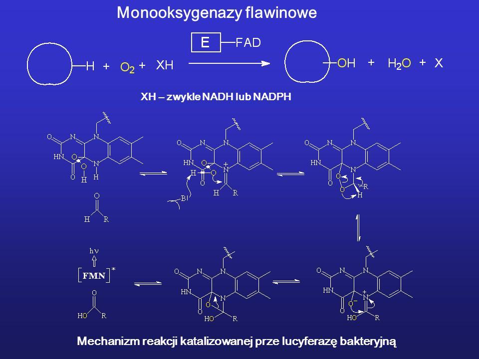 Monooksygenazy flawinowe XH – zwykle NADH lub NADPH Mechanizm reakcji katalizowanej prze lucyferazę bakteryjną