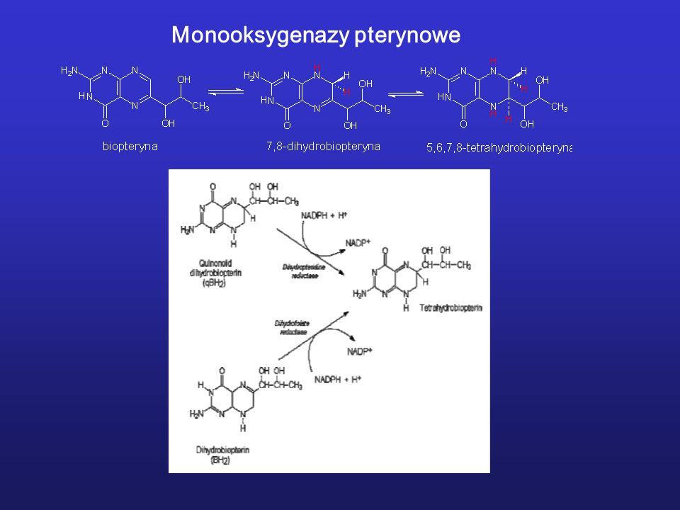 Monooksygenazy pterynowe