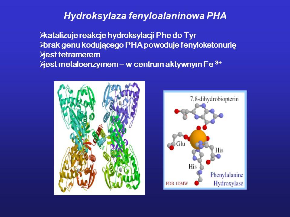 Hydroksylaza fenyloalaninowa PHA katalizuje reakcje hydroksylacji Phe do Tyr brak genu kodującego PHA powoduje fenyloketonurię jest tetramerem jest me