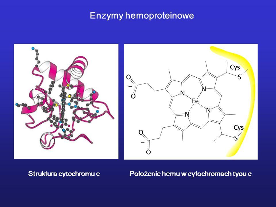 Struktura cytochromu cPołożenie hemu w cytochromach tyou c Enzymy hemoproteinowe