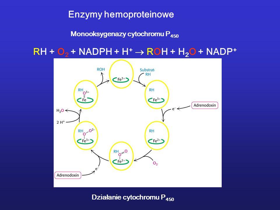 Monooksygenazy cytochromu P 450 RH + O 2 + NADPH + H + ROH + H 2 O + NADP + Działanie cytochromu P 450