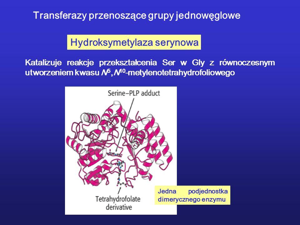 Transferazy przenoszące grupy jednowęglowe Hydroksymetylaza serynowa Katalizuje reakcje przekształcenia Ser w Gly z równoczesnym utworzeniem kwasu N 5